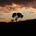 2 - EricaMartinetti_natura&paesaggio (1)
