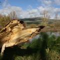 Lorena Cosentino_TEMA Natura e paesaggio02