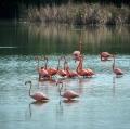 Davide Cannavò - natura e wildlife 01
