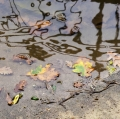 serena-vasta_Tema -pioggia-03