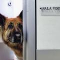 bani-angelo-pronto-soccorso-veterinario-1