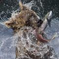 Bernardeschi-Valter-Fishing