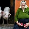 Zagolin Sandra - I due maialini
