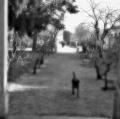 007_grassi-antonio_ricordi-immaginati