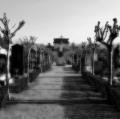 021_grassi-antonio_ricordi-immaginati