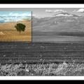 antonio-zimbone_il-paesaggio-nel-paesaggio-1