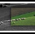 antonio-zimbone_il-paesaggio-nel-paesaggio-12