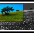 antonio-zimbone_il-paesaggio-nel-paesaggio-17