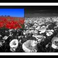 antonio-zimbone_il-paesaggio-nel-paesaggio-19