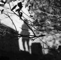 paglionico-cristina_ombre-3