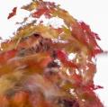foglie-di-mario-caramanna-10