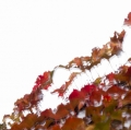 foglie-di-mario-caramanna-11