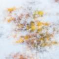 foglie-di-mario-caramanna-13