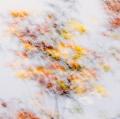 foglie-di-mario-caramanna-14