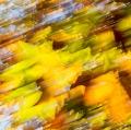 foglie-di-mario-caramanna-15