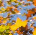 foglie-di-mario-caramanna-16