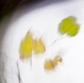 foglie-di-mario-caramanna-17