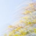 foglie-di-mario-caramanna-18