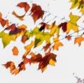 foglie-di-mario-caramanna-21