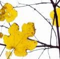 foglie-di-mario-caramanna-22