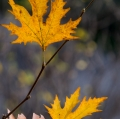 foglie-di-mario-caramanna-23