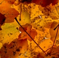 foglie-di-mario-caramanna-24