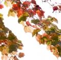 foglie-di-mario-caramanna-25