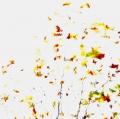 foglie-di-mario-caramanna-27