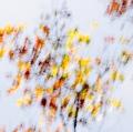 foglie-di-mario-caramanna-28