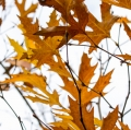 foglie-di-mario-caramanna-29