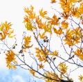 foglie-di-mario-caramanna-3
