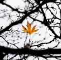 foglie-di-mario-caramanna-4