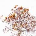 foglie-di-mario-caramanna-5