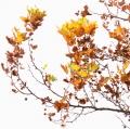 foglie-di-mario-caramanna-6