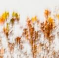 foglie-di-mario-caramanna-7
