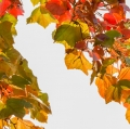 foglie-di-mario-caramanna-8