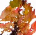 foglie-di-mario-caramanna-9