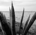 c5_natura-chapalco-pueblo-pescado