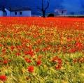 giuseppe-cannoni_il-colore-nel-paesaggio-16