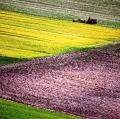 giuseppe-cannoni_il-colore-nel-paesaggio-22