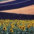 giuseppe-cannoni_il-colore-nel-paesaggio-25