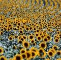 giuseppe-cannoni_il-colore-nel-paesaggio-26