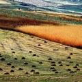 giuseppe-cannoni_il-colore-nel-paesaggio-28