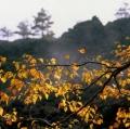 018_betulla-endemica-anno-2002