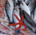 018_mongioi-santo-_-pescheria-di-catania