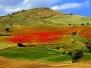 Nunziato Palazzo - Sicilia: terra di luce e di colori