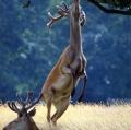 busi-riccardo_natura-mundi-21
