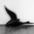 0018_roberto-caielli_il-tempo-a-casa-colombo