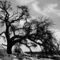 0006_lo_p1190125-alberi