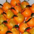 052-crisafi-carmelo